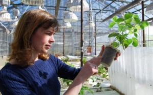 Corn Belt Researchers Advance Soybean Science