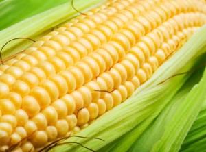 High Yield Corn