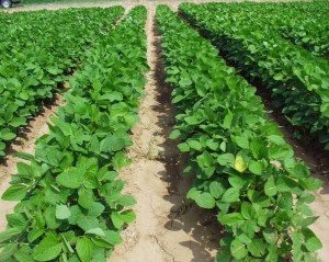 Farming Economy Decline
