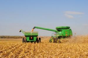 Harvest Nearing Finale