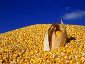Corn and Soybean Prices