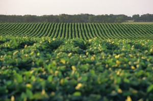 Shift from Corn to Soybeans