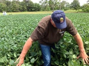 Soybean Field Research