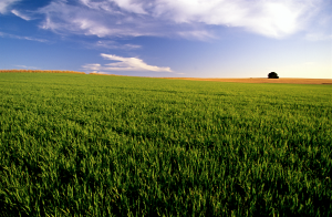 Crop Insurance for Risk Management