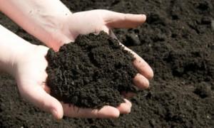 Soil Picture
