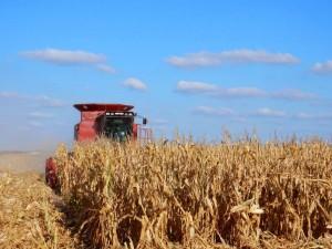 Bumper Corn Crop