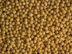 Climate Change is Suppressing US Soybean Yields