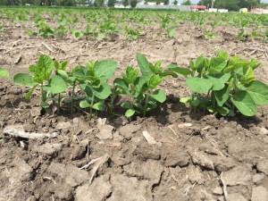 Soybean Seed Permeability
