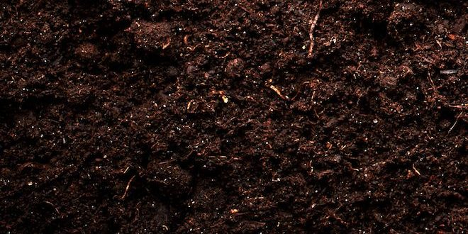 Beneficial bacteria support soil plant health bigyield for Soil support