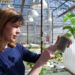 Corn Belt Researchers Advance Soybean Science