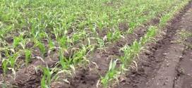 Big Yield Spray Hazards