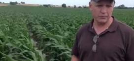 Bob Joehl's High Yield Corn Crop