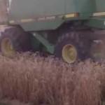 High Yield Wheat Harvest