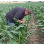 Franklin Weaver Inspecting Corn