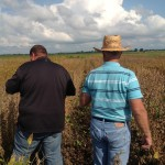 Franklin Weaver Inspecting High Yield Soybean Plot