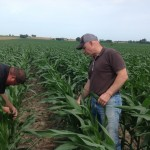 Franklin Weaver with Bob Joehl Inspecting Corn 2