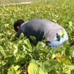 Kellen Bounous Inspecting High Yield Soybean Plot