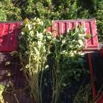 Soybean Pod Inspection