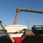 Wheat Transfer From Combine to Weigh Wagon 2
