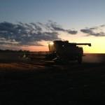 Harvesting at Night 1