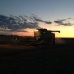 Harvesting at Night 2
