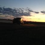 Harvesting at Night 4
