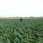 Early Corn Inspection