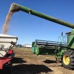 Grain Transfer 1