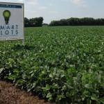 Smartplot Soybeans