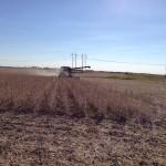 Soybean Harvest 10