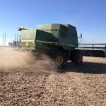 Soybean Harvest 3