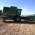 Soybean Harvest 4