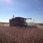 Soybean Harvest 5