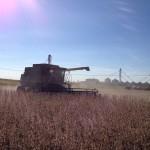 Soybean Harvest 6
