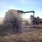 Soybean Harvest 7