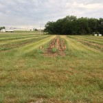 Chemical Tests on Soybean Strips 2