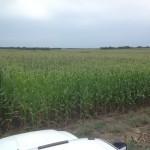 Large Scale Infurrow Testing on Corn 1
