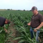 Corn Inspection 3