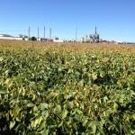 Soybean Test Plot 2