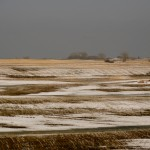 Check Wheat Field for Winter Damage