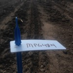 Soybean Planting 3