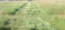 Hay-and-Forage-Research
