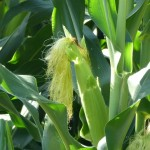 Crop Outlook for 2014