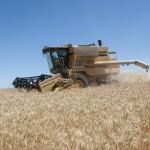 Missouri Winter Wheat Harvest