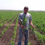Darren Eck Discusses Double Crop Advantages on Milo with BP In Furrow