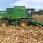 Corn Harvest 7