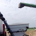 Corn Harvest 9