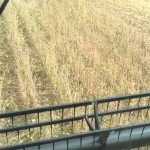 Soybeans Plot Harvest 2014