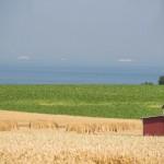 More Efficient Rural America