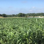June 27 Crop Update